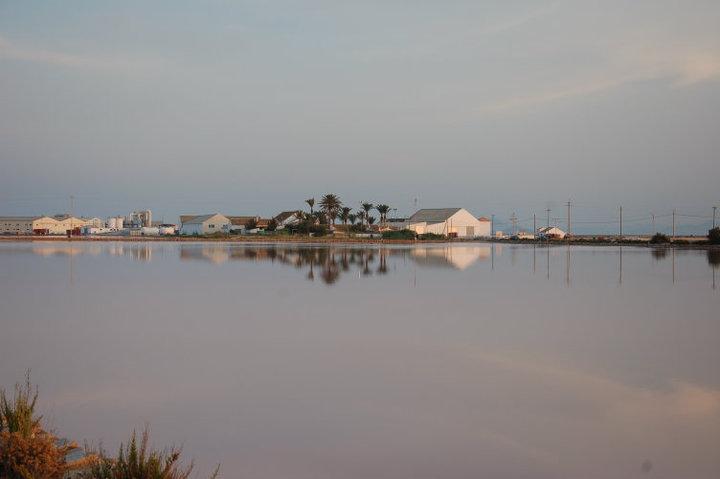 El Parque Regional de las Salinas y Arenales de San Pedro del Pinatar incluido en la red internacional 'Migratory Birds for People'